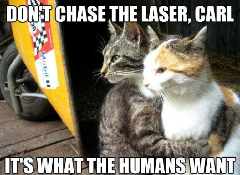 Wise Cats Humorkitty Funny Cat Pictures Funny Cat Memes Funny Cat Images