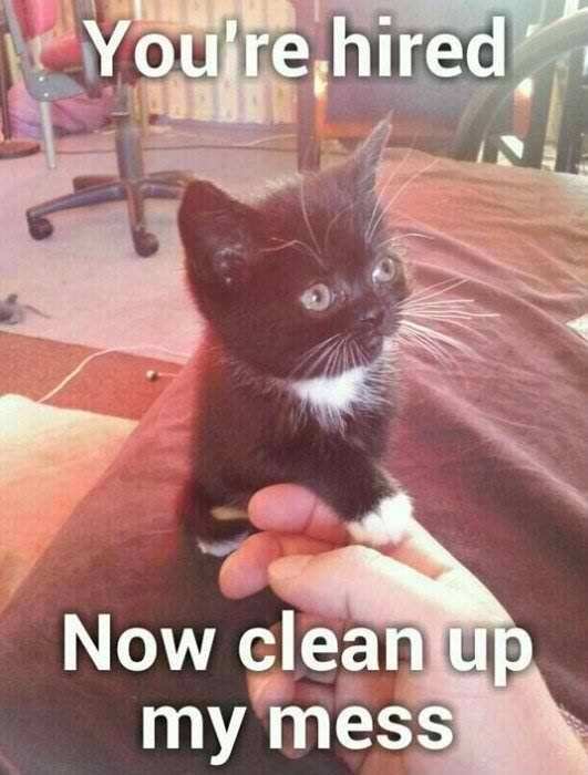 youre hired now clean up my mess funny cat pictures, funny cat memes, funny cat images humorkitty